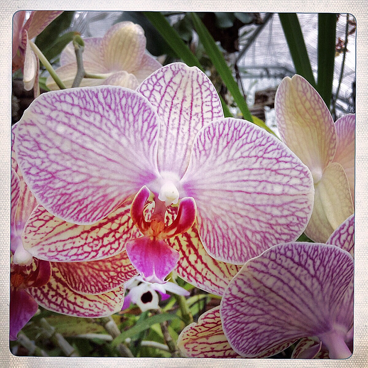 Gift 577 Orchids Anordinarymiracleday