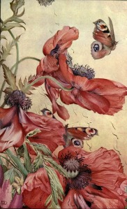 Amapolas-News of spring and other nature studies 1917
